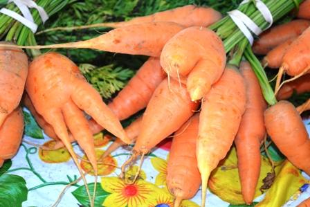 Carrots-small